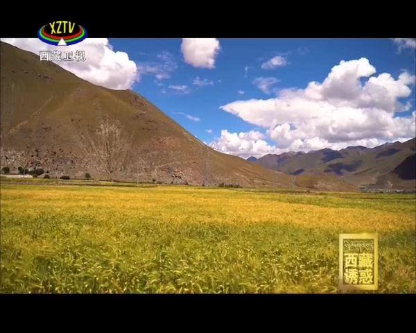 《西藏诱惑》共创脱贫致富路