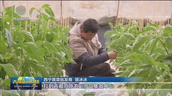 【新春走基层】青海省贵德县:温室大棚蔬菜陆续上市