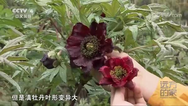 《远方的家》大好河山 多彩植物世界