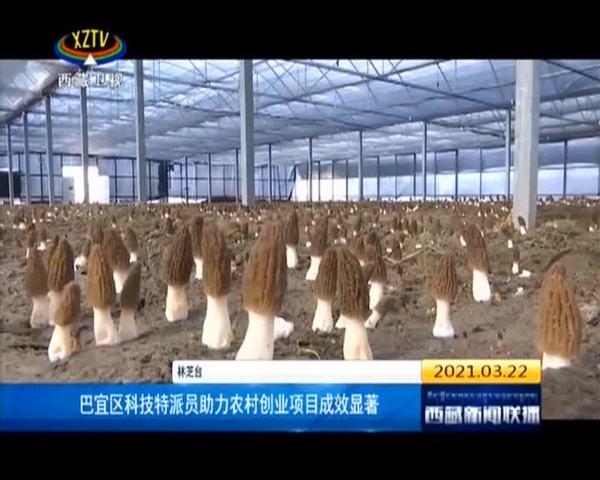 西藏自治区巴宜区科技特派员助力农村创业项目成效显著
