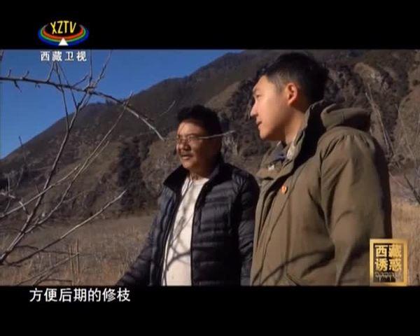 《西藏诱惑》我是苹果书记