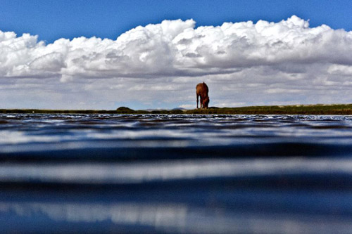 野生动物保护机制,羌塘自然保护区阿里片区的藏羚羊