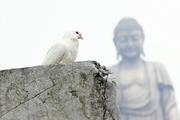 恐怖主义根源 佛教和平观的作用与价值