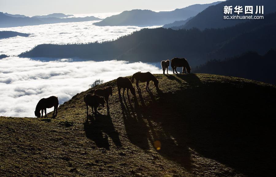 蓝天,白云,雪山,牧场,云海,森林,河流,色彩斑斓,风景如画.