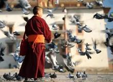 佛教弟子应具备的质量