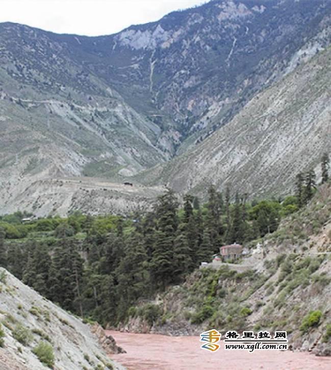 云南省德钦县发现古柏树群 最高树龄达800年
