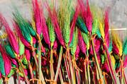 罗萨美朵:冬季西藏最美的藏年花