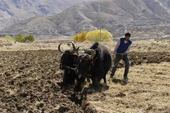Farmers irrigate fields in Tibet