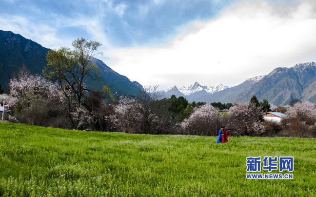 Tibet's total grassland reached 1.3 bln mu