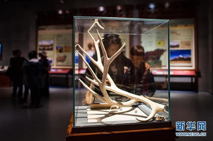 西藏首家自然科学博物馆免费开放