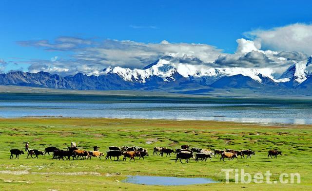 High-tech monitoring system for Tibet's grassland