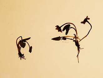 [牦牛走进北京]一头牛也可以这么土豪,冬虫夏草从小吃到大