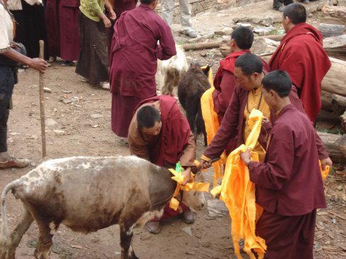藏历新年里的藏传佛教