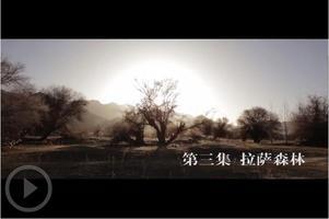 西藏爱情故事 第三集