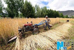 Average income of  Tibetan farmers continue to grow in double digits