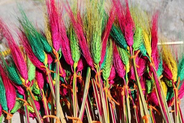 """Losar Metok: most beautiful """"flower"""" in Tibet's winter"""