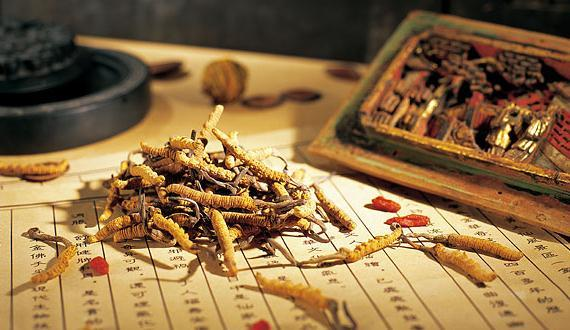 Tibetan fungus gatherers obliged to find steady jobs