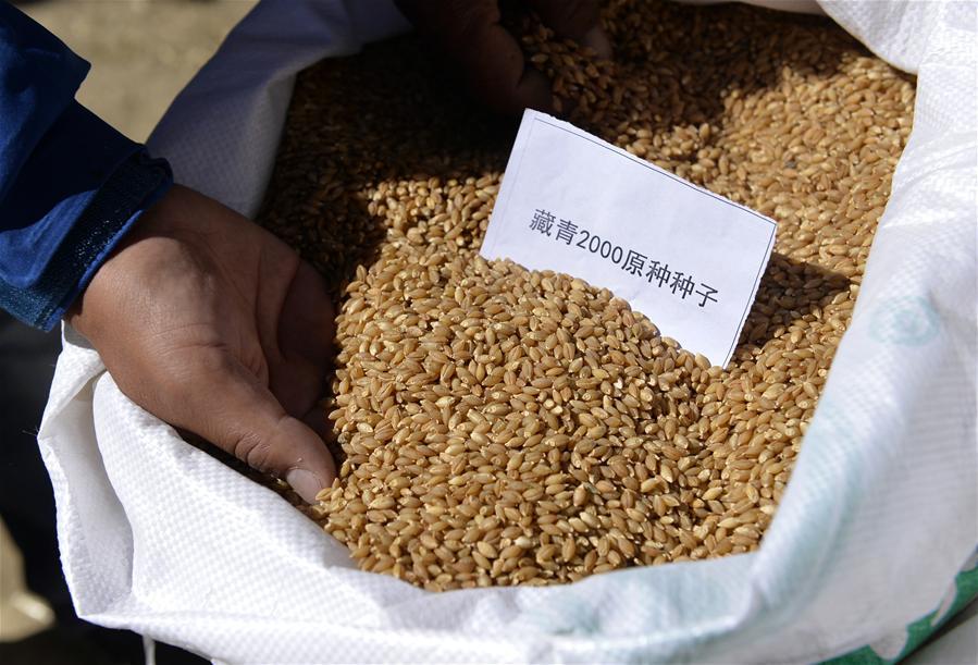 Tibet: Reiche Gemüse- und Getreideernte eingefahren