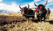 《西藏传统农耕用具图典》预计4月出版