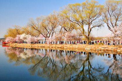 Discover beautiful China in spring blossom