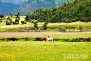 风象丨清明踏青 和西藏的春天跳支华尔兹