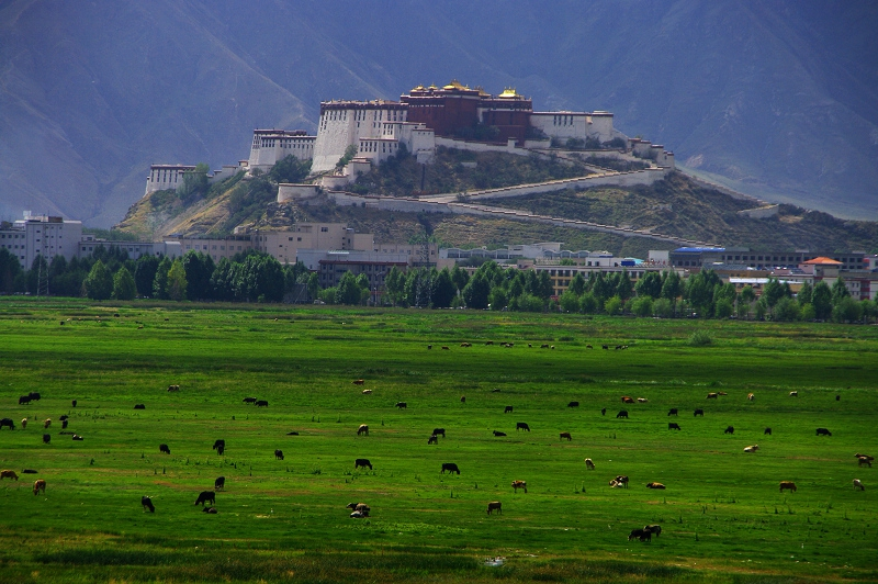 Tibet adds four more testing sites for national wetland parks
