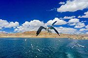 阿里班公湖