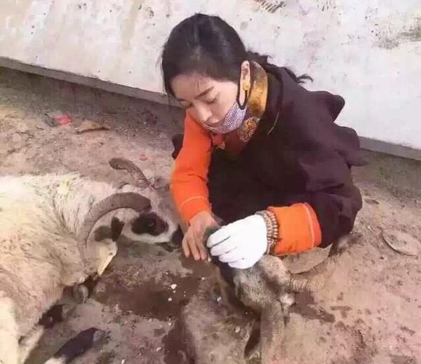 Tibeterin sammelt Millionen für die Freiheit tausender Ziegen