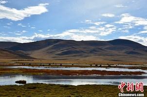 """三江源国家公园里牧民们的""""绿色感恩"""""""