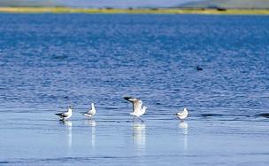 """若尔盖国家湿地公园""""转正"""" 总面积为2662.7公顷"""