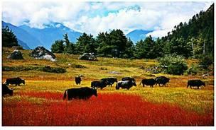 遇见金秋--西藏的秋季之旅