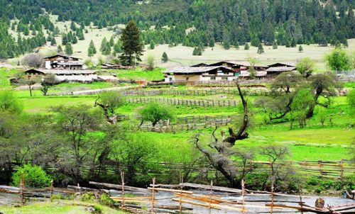 西藏林芝鲁朗国际旅游小镇有望今秋迎客图片