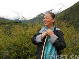 西藏政协委员雷菊芳:产业扶贫,藏药跟上