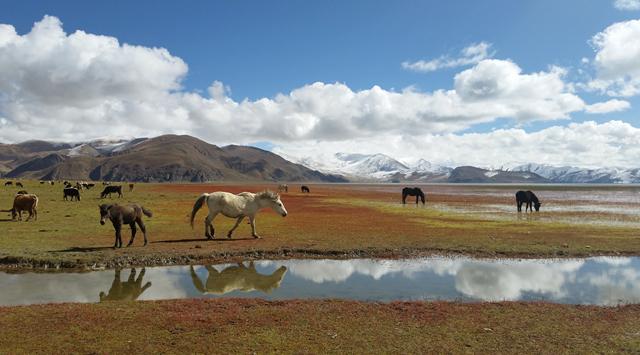 守住生态红线 让西藏成为世界最靓丽的生态名片
