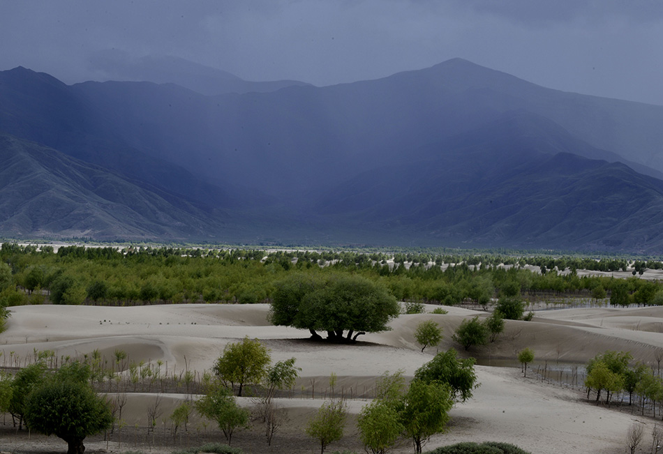 Tibet will künftig viel aufforsten