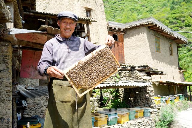 千年羌寨养蜂人