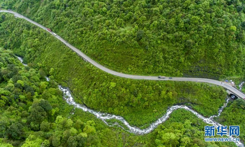 Tibet makes breakthrough in high altitude artificial afforestation