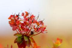 香格里拉的斑斓深秋