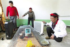 日喀则藏鸡养殖助脱贫 产业致富有奔头