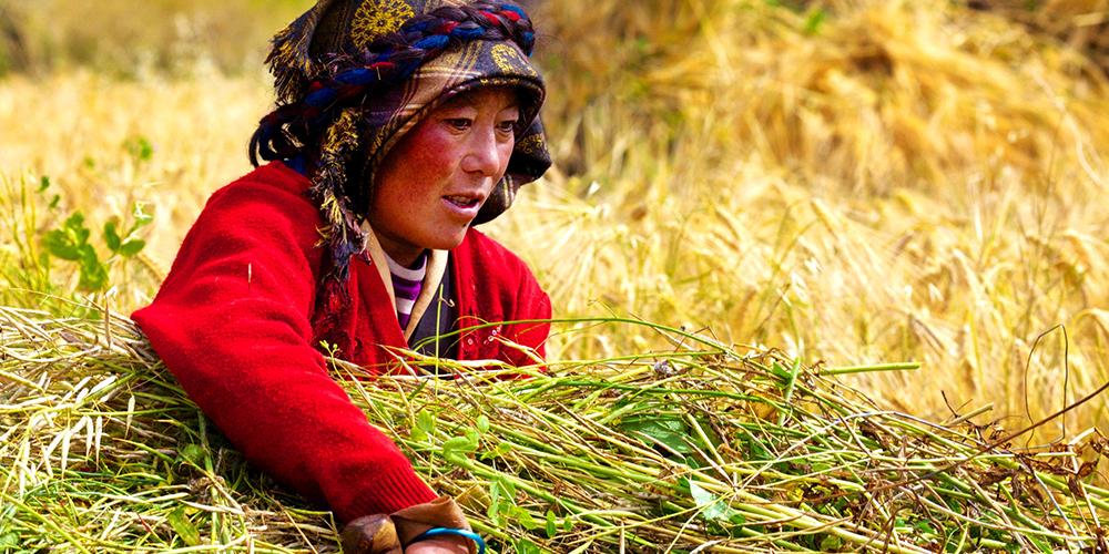 沙万泉:西藏生活点滴