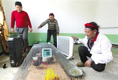 Tibetische Hühner helfen bei der Armutsbekämpfung