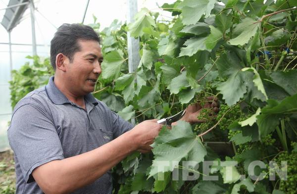 党的十八大以来西藏农牧业科技援藏工作掠影