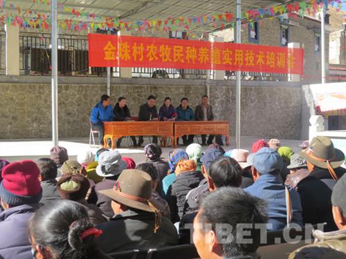 西藏山南金珠村发展特色产业 人均纯收入冲万