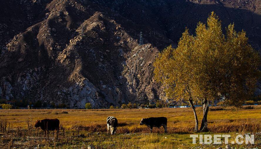西藏赏秋 这些地方你不可错过