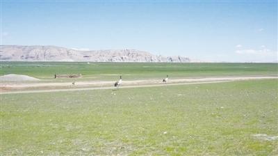 Über 600 Schwarzhalskraniche fliegen nach und nach zum Ort des Überwinterns