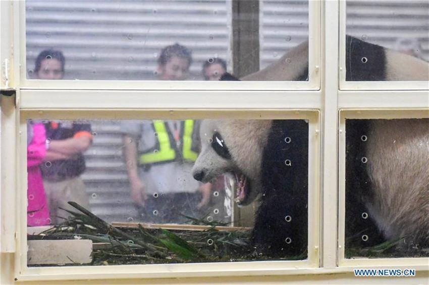In Malaysia geborenes Panda-Junges fliegt zurück nach China
