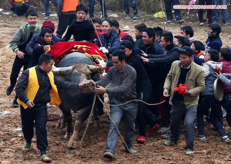 Stierkampf in Guizhou