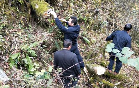 四川泸定森林公安查处一起滥伐林木案