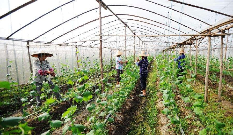拉萨羊达现代设施农业示范园:大棚花果香飘高原