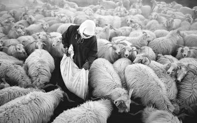 Qinghai: Nichtüberweidungs-Belohnungspolitik hilft 800.000 Hirten